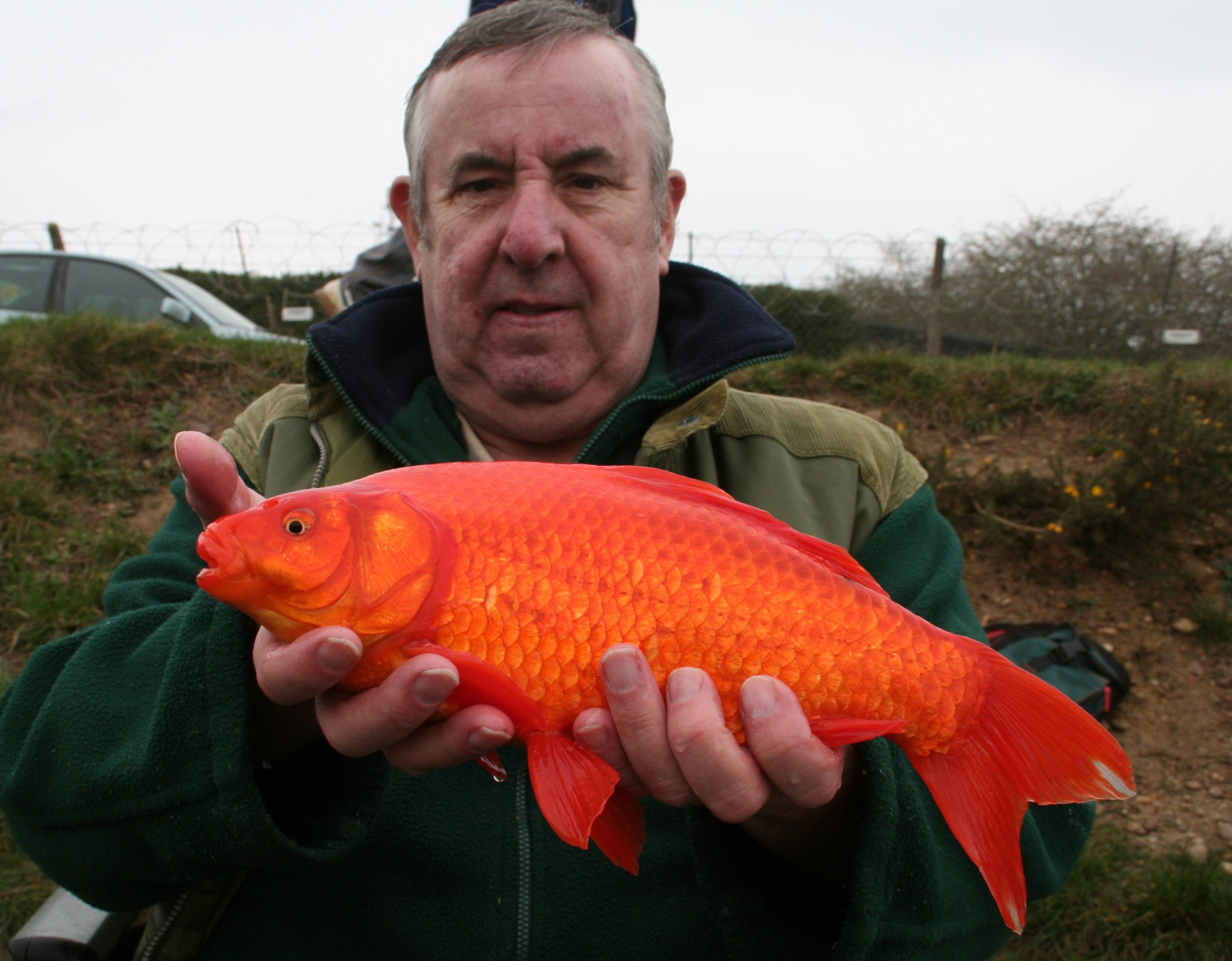 Crucian carp in search of gold lee swords fishing for Fishing for carp