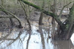 Snow melt Trent flood