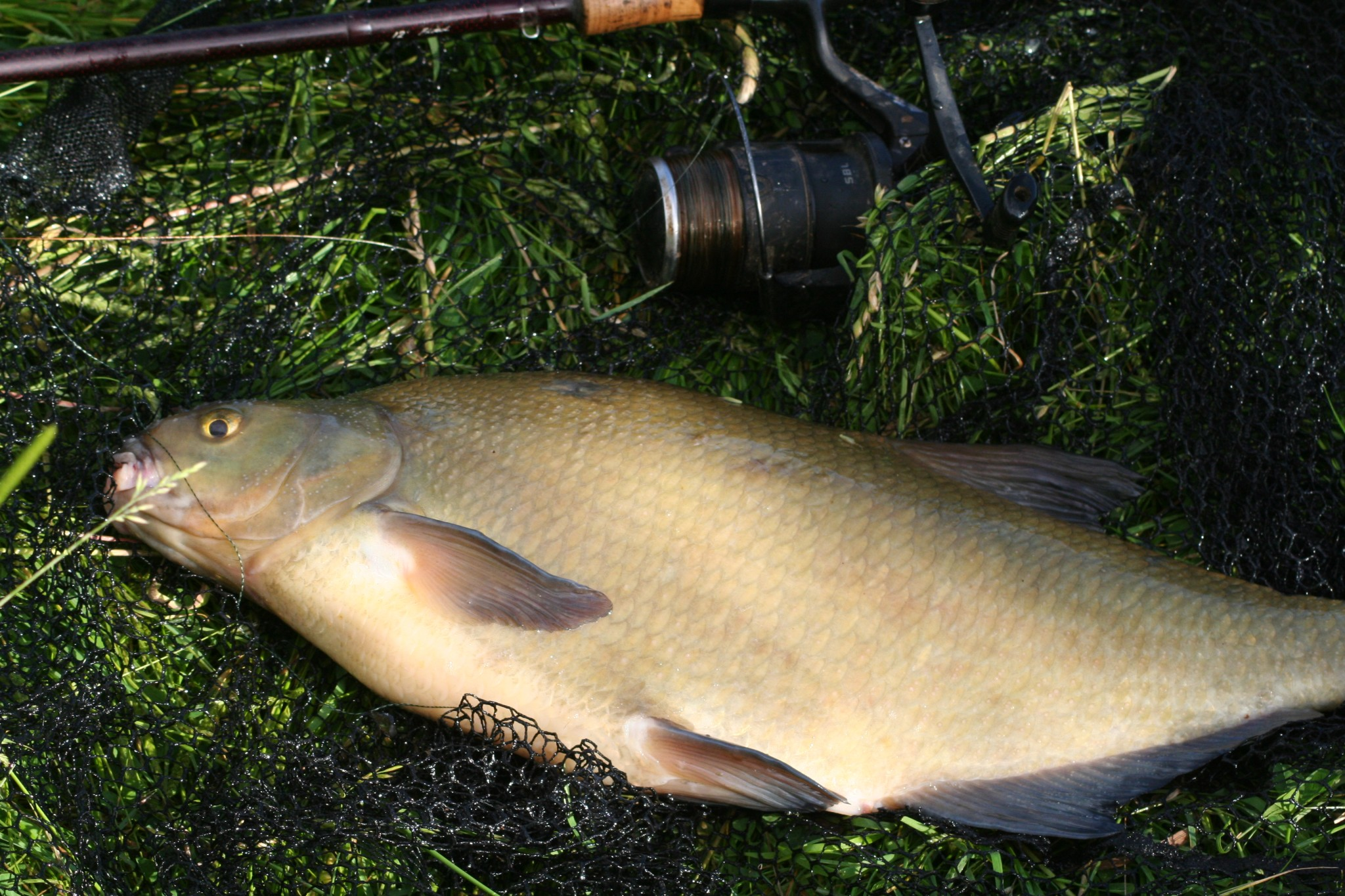 A self analysis of my barbel fishing on the trent am i for What kind of fish am i