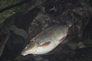 Last fish of the season