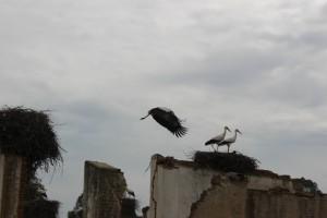 Storks!!!