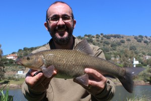 Small headed barbel luciobarbus microcephalus