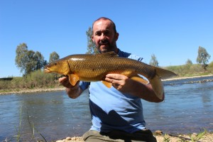 Luciobarbus Bocagei or Common Barbel